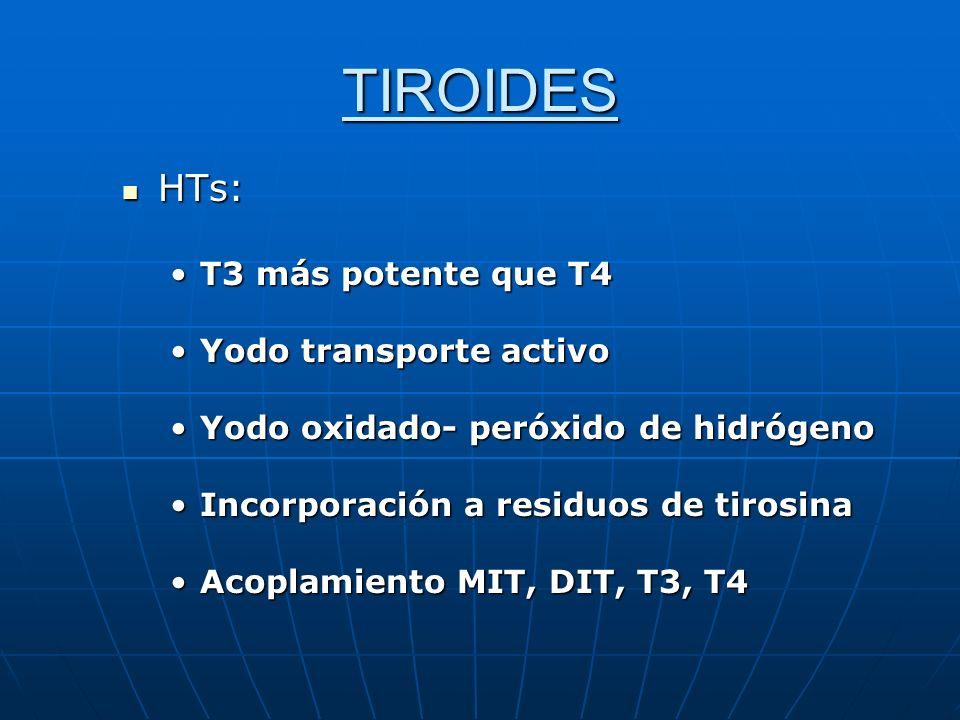 TIROIDES HTs: T3 más potente que T4 Yodo transporte activo