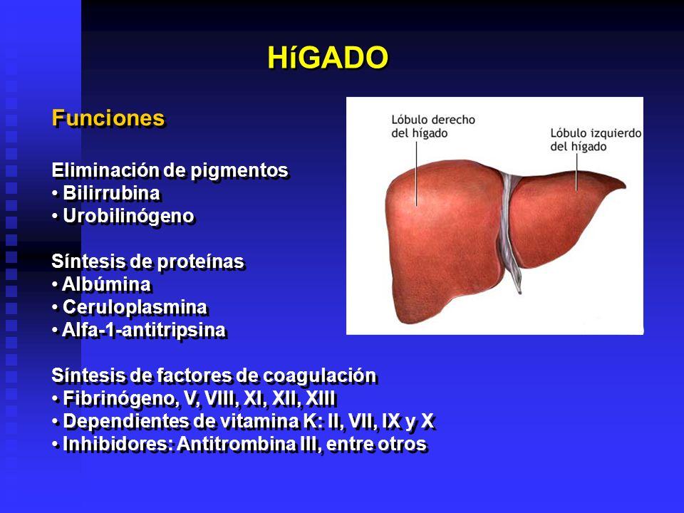 HíGADO Funciones Eliminación de pigmentos Bilirrubina Urobilinógeno