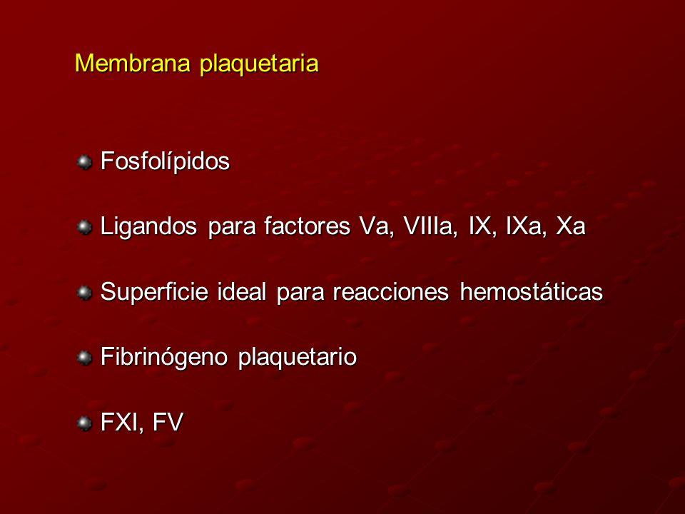 Membrana plaquetaria Fosfolípidos. Ligandos para factores Va, VIIIa, IX, IXa, Xa. Superficie ideal para reacciones hemostáticas.