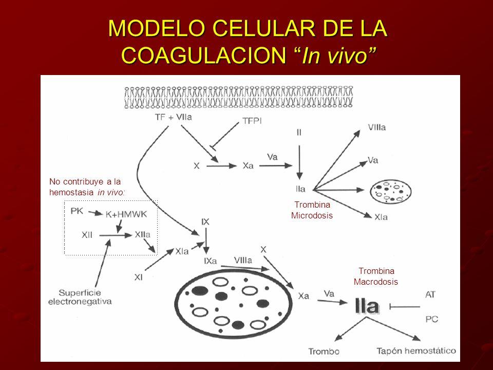 MODELO CELULAR DE LA COAGULACION In vivo