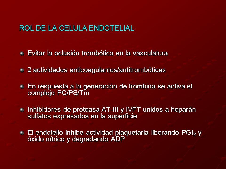 ROL DE LA CELULA ENDOTELIAL