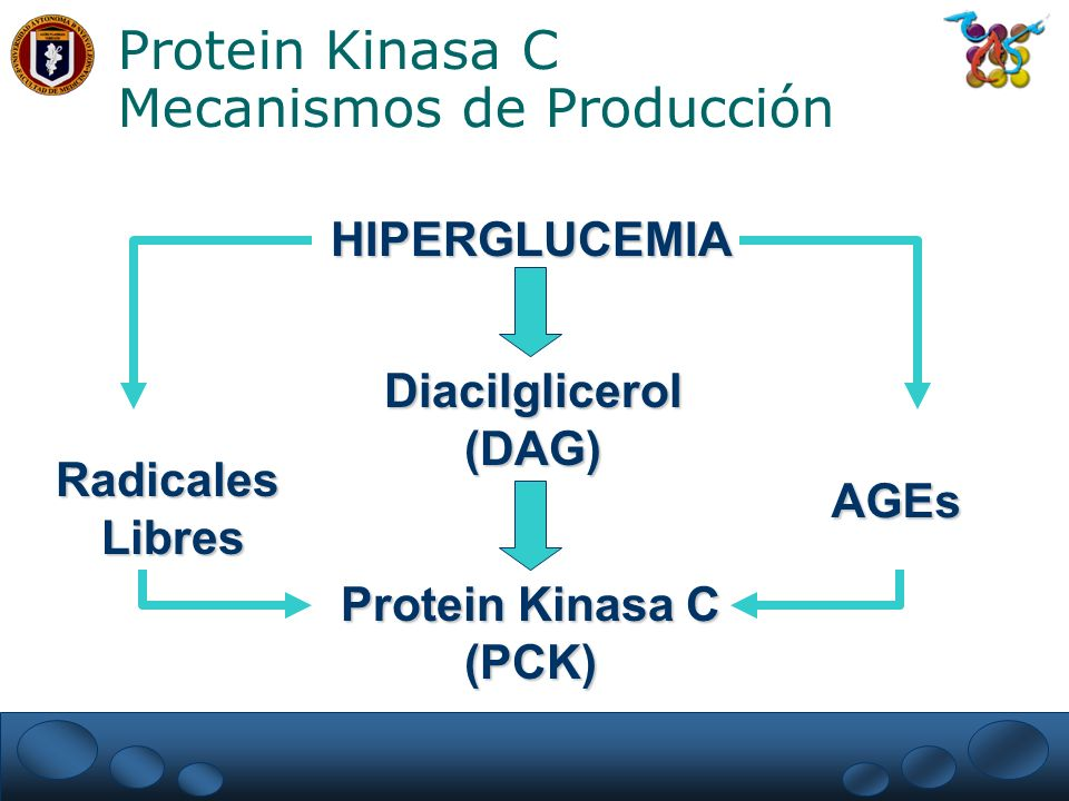 Protein Kinasa C Mecanismos de Producción