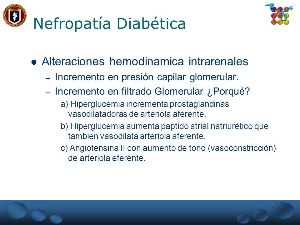 Nefropatía Diabética Alteraciones hemodinamica intrarenales