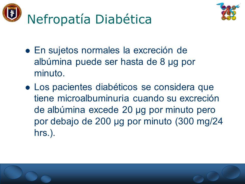Nefropatía Diabética En sujetos normales la excreción de albúmina puede ser hasta de 8 µg por minuto.