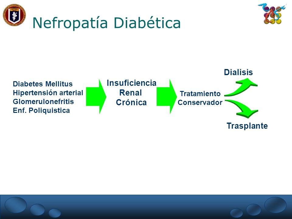 Nefropatía Diabética Dialisis Insuficiencia Renal Crónica Trasplante