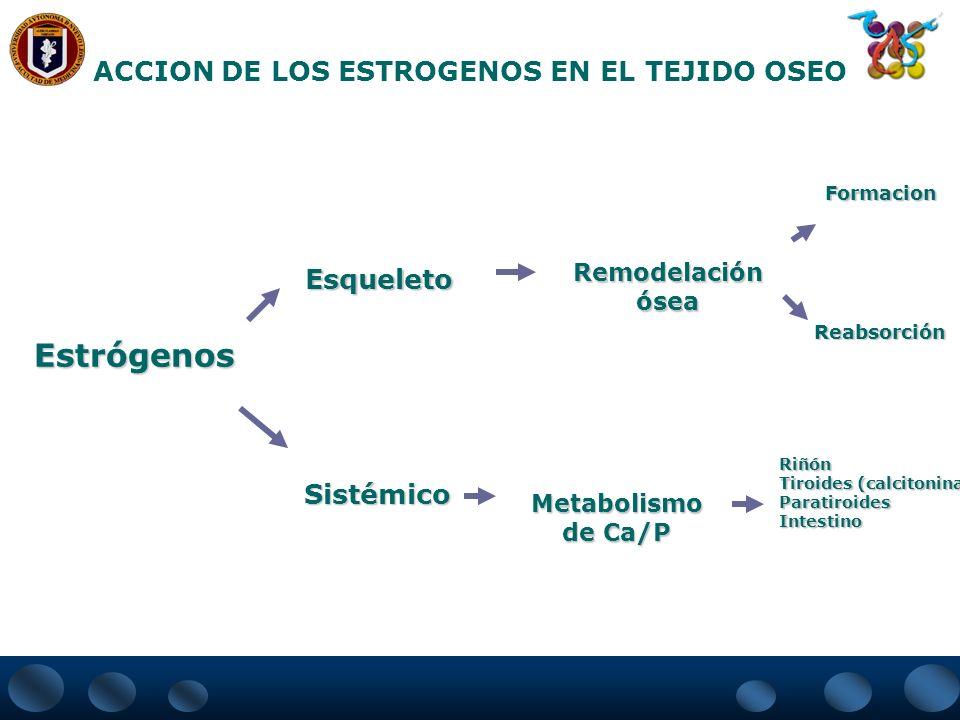 Estrógenos ACCION DE LOS ESTROGENOS EN EL TEJIDO OSEO Esqueleto