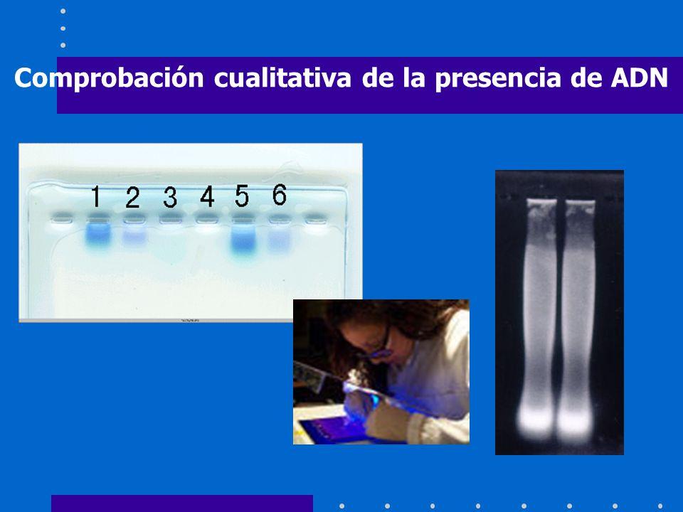 Comprobación cualitativa de la presencia de ADN