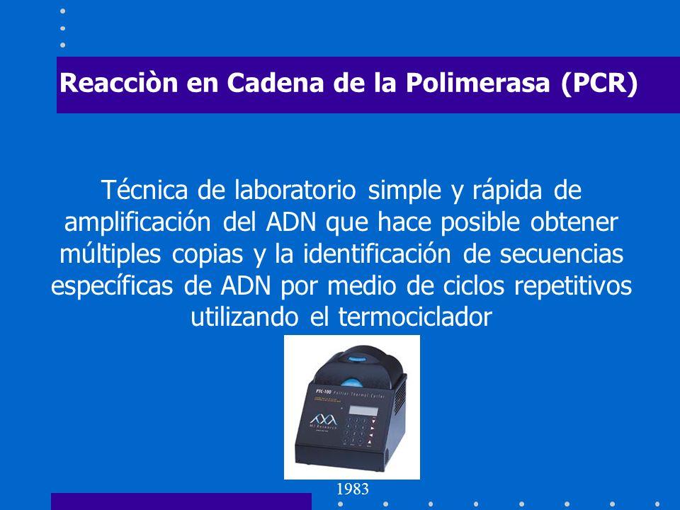 Reacciòn en Cadena de la Polimerasa (PCR)