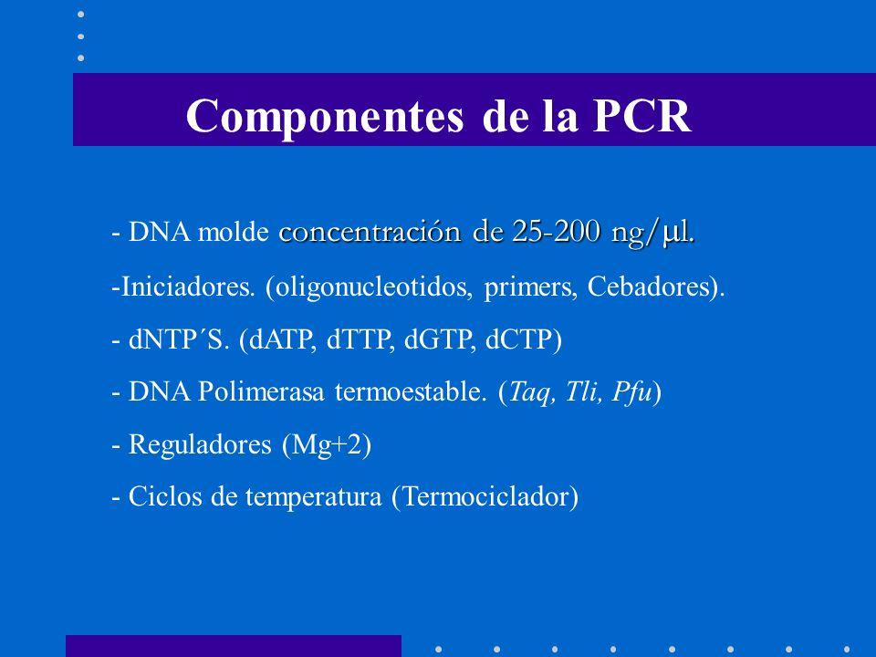 Componentes de la PCR DNA molde concentración de 25-200 ng/ml.