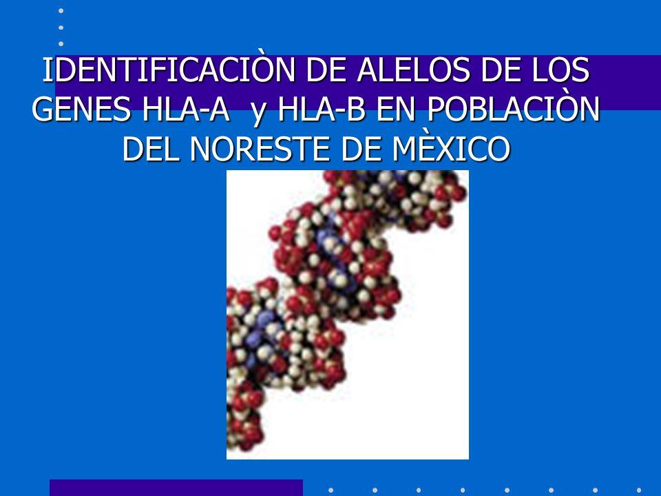 IDENTIFICACIÒN DE ALELOS DE LOS GENES HLA-A y HLA-B EN POBLACIÒN DEL NORESTE DE MÈXICO