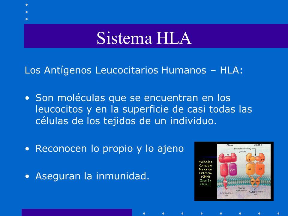 Sistema HLA Los Antígenos Leucocitarios Humanos – HLA:
