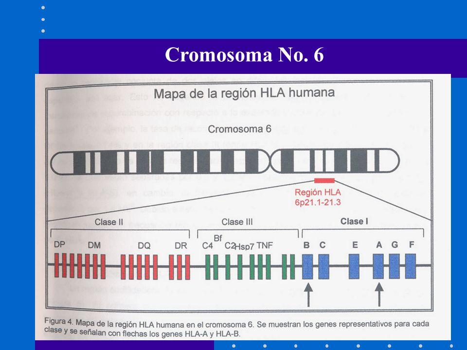 Cromosoma No. 6