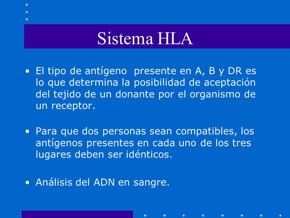 Sistema HLA