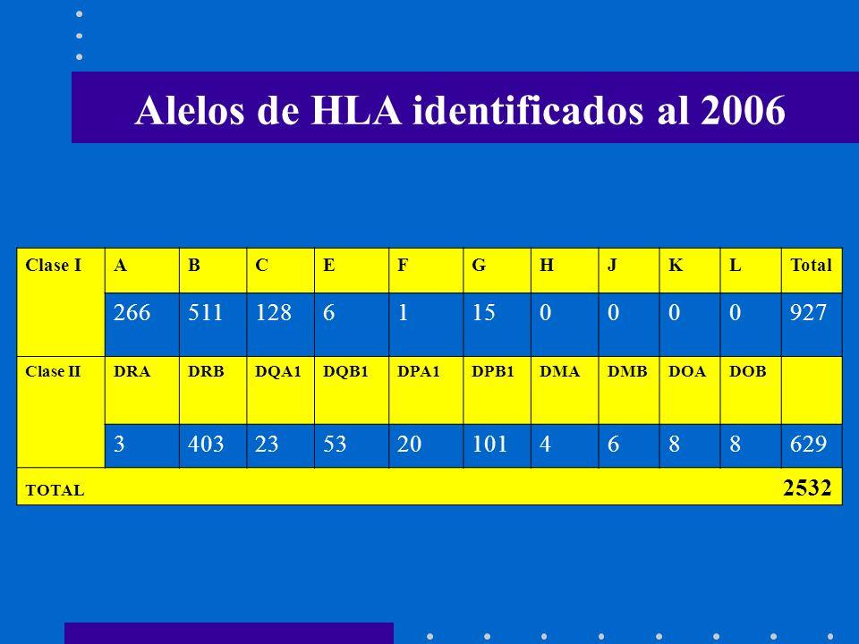 Alelos de HLA identificados al 2006