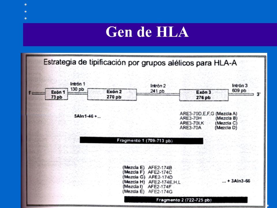 Gen de HLA