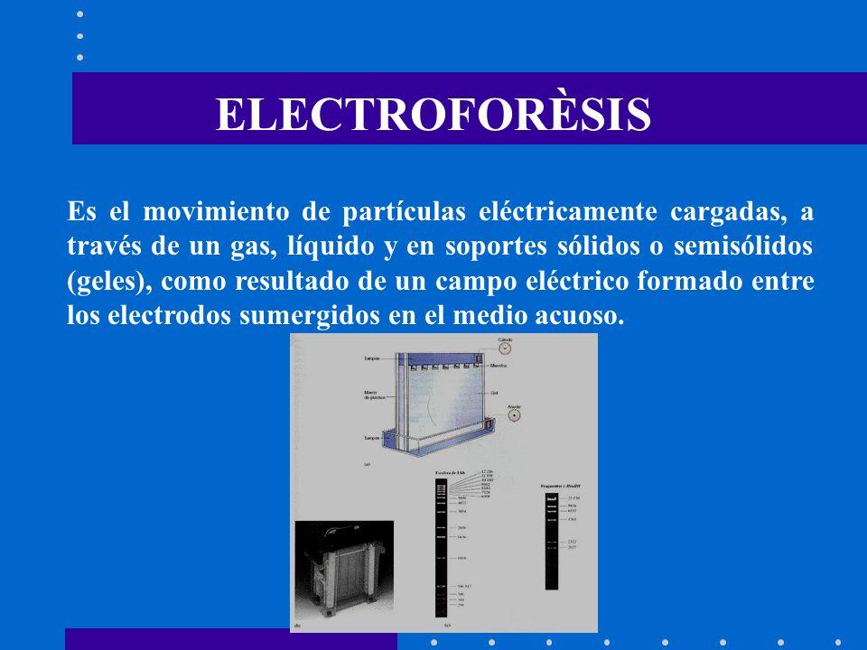 ELECTROFORÈSIS
