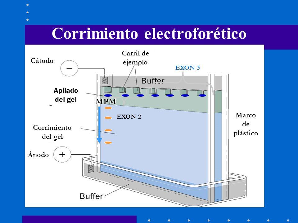 Corrimiento electroforético