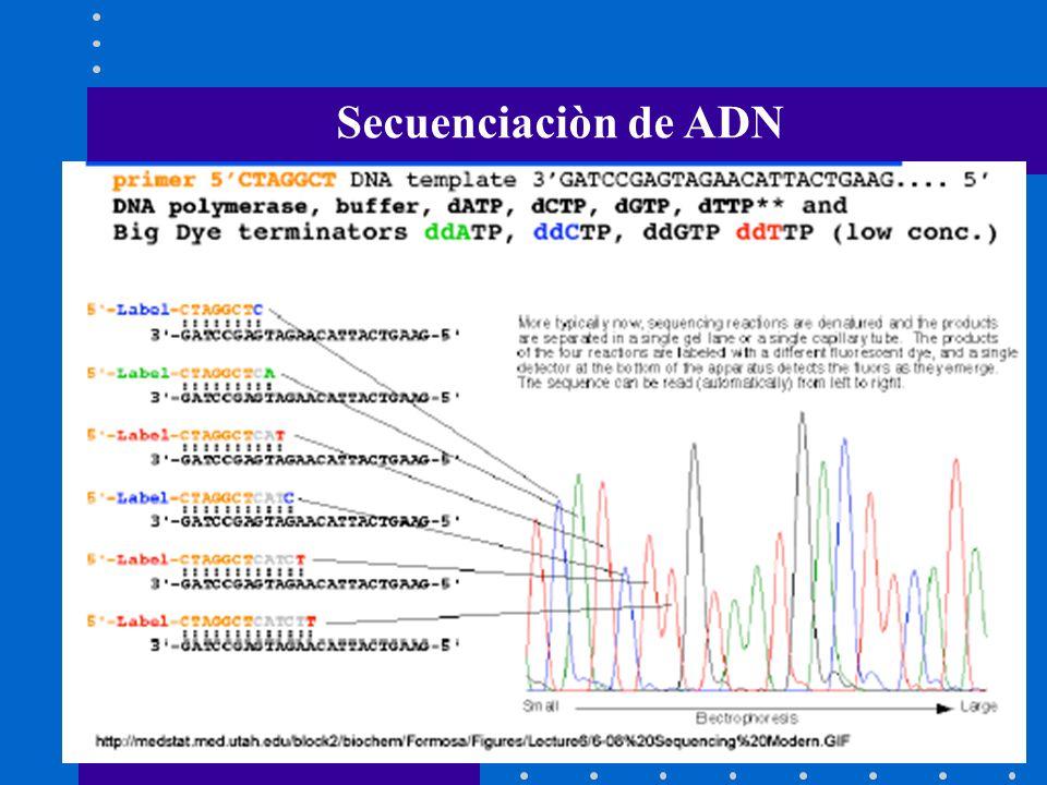 Secuenciaciòn de ADN
