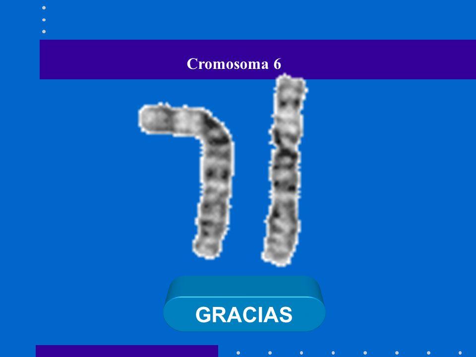 Cromosoma 6 GRACIAS