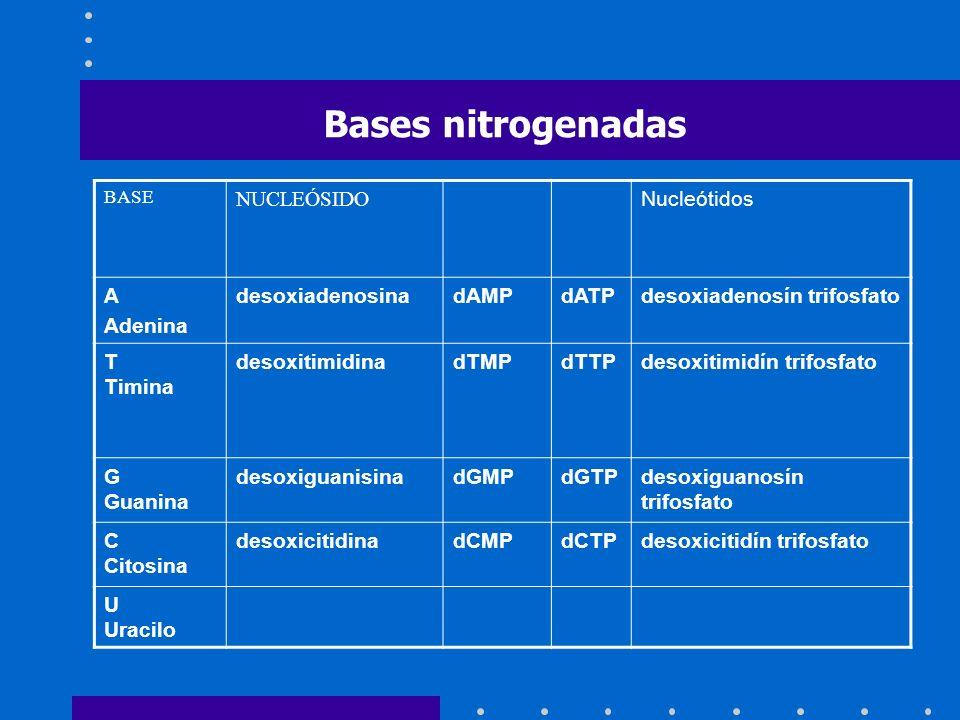 Bases nitrogenadas NUCLEÓSIDO Nucleótidos A Adenina desoxiadenosina