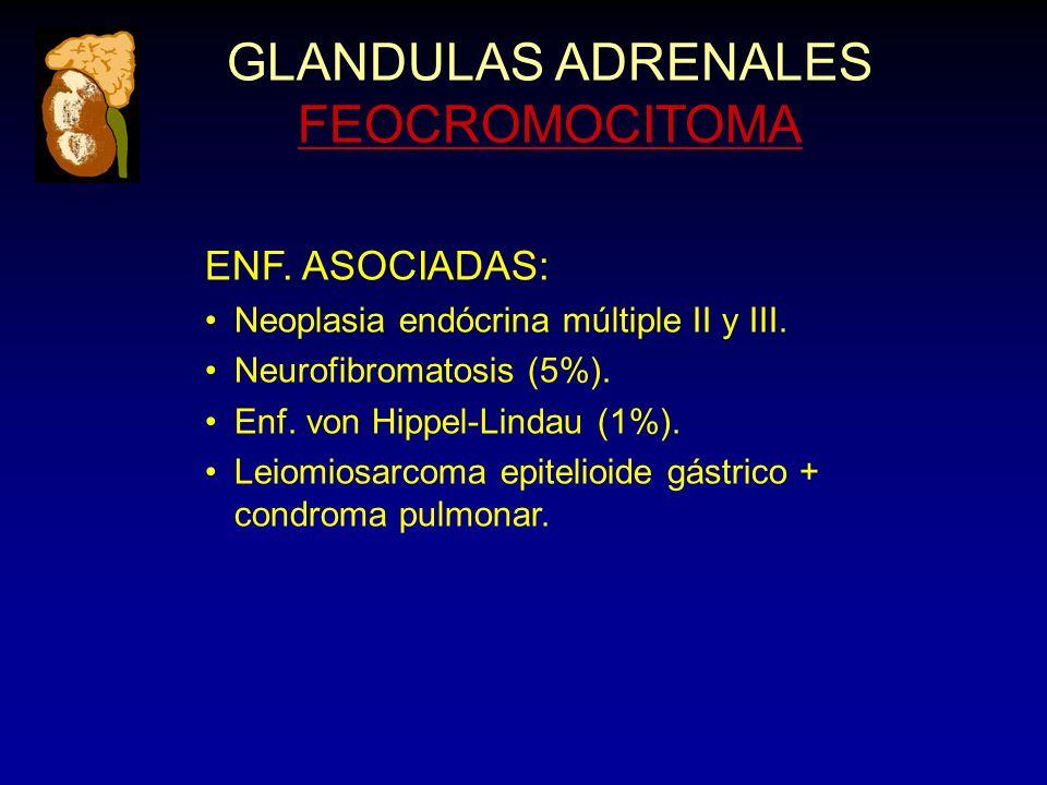 GLANDULAS ADRENALES FEOCROMOCITOMA