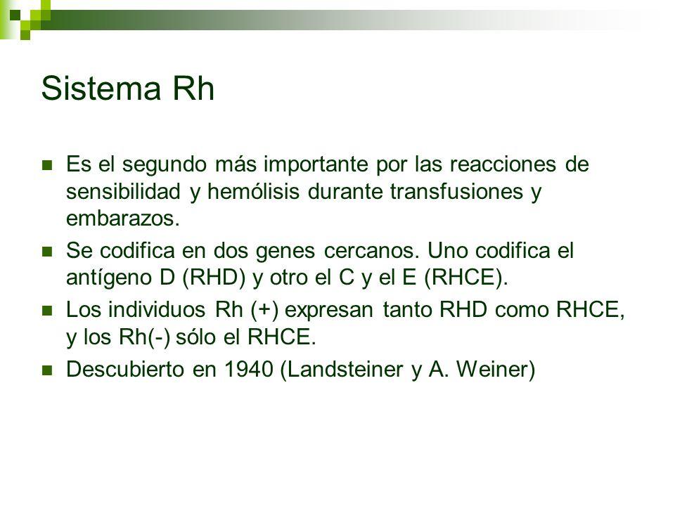 Sistema Rh Es el segundo más importante por las reacciones de sensibilidad y hemólisis durante transfusiones y embarazos.