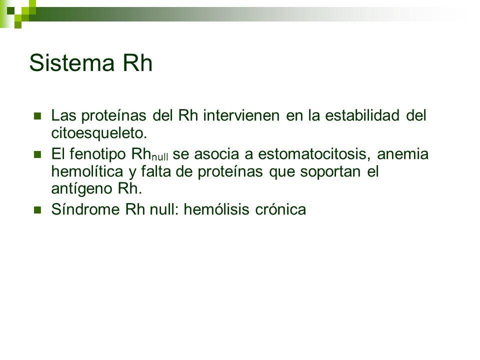 Sistema RhLas proteínas del Rh intervienen en la estabilidad del citoesqueleto.