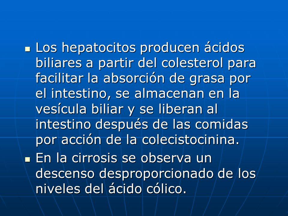 Los hepatocitos producen ácidos biliares a partir del colesterol para facilitar la absorción de grasa por el intestino, se almacenan en la vesícula biliar y se liberan al intestino después de las comidas por acción de la colecistocinina.