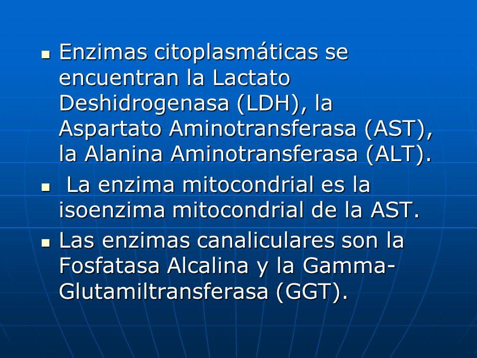 Enzimas citoplasmáticas se encuentran la Lactato Deshidrogenasa (LDH), la Aspartato Aminotransferasa (AST), la Alanina Aminotransferasa (ALT).