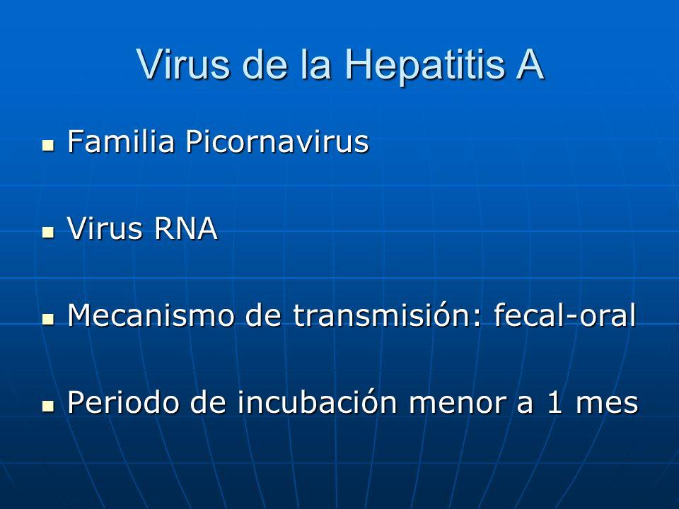 Virus de la Hepatitis A Familia Picornavirus Virus RNA