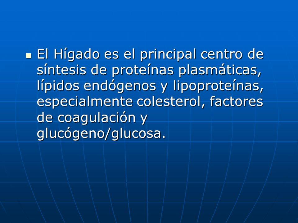 El Hígado es el principal centro de síntesis de proteínas plasmáticas, lípidos endógenos y lipoproteínas, especialmente colesterol, factores de coagulación y glucógeno/glucosa.