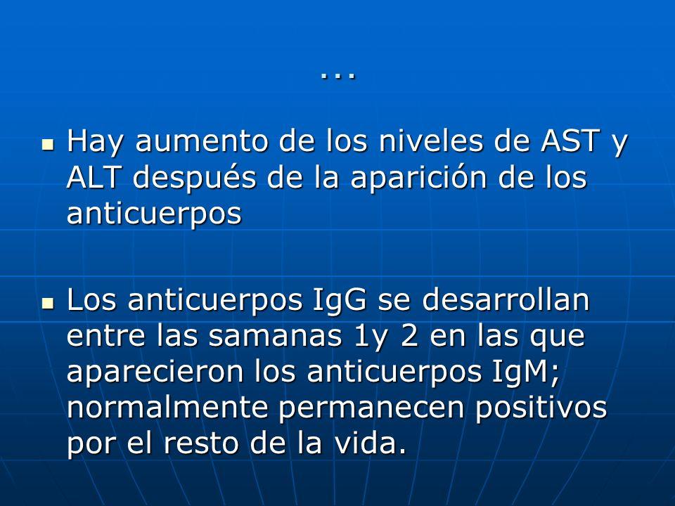 … Hay aumento de los niveles de AST y ALT después de la aparición de los anticuerpos.