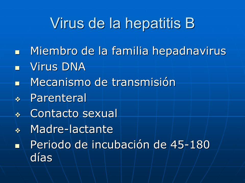 Virus de la hepatitis B Miembro de la familia hepadnavirus Virus DNA