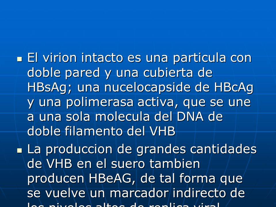 El virion intacto es una particula con doble pared y una cubierta de HBsAg; una nucelocapside de HBcAg y una polimerasa activa, que se une a una sola molecula del DNA de doble filamento del VHB