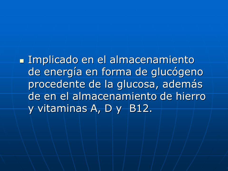 Implicado en el almacenamiento de energía en forma de glucógeno procedente de la glucosa, además de en el almacenamiento de hierro y vitaminas A, D y B12.