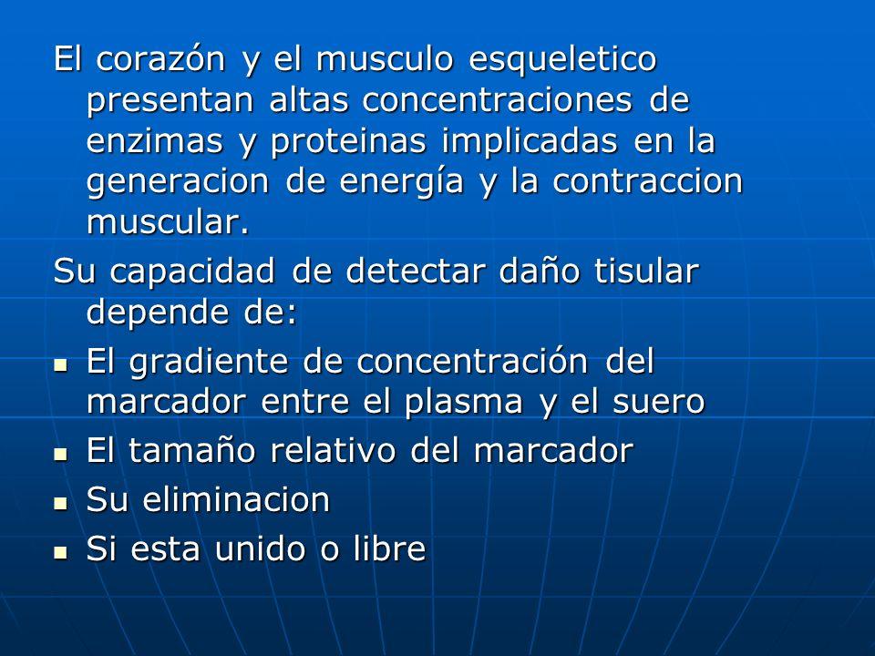 El corazón y el musculo esqueletico presentan altas concentraciones de enzimas y proteinas implicadas en la generacion de energía y la contraccion muscular.