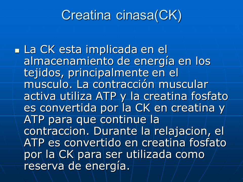 Creatina cinasa(CK)