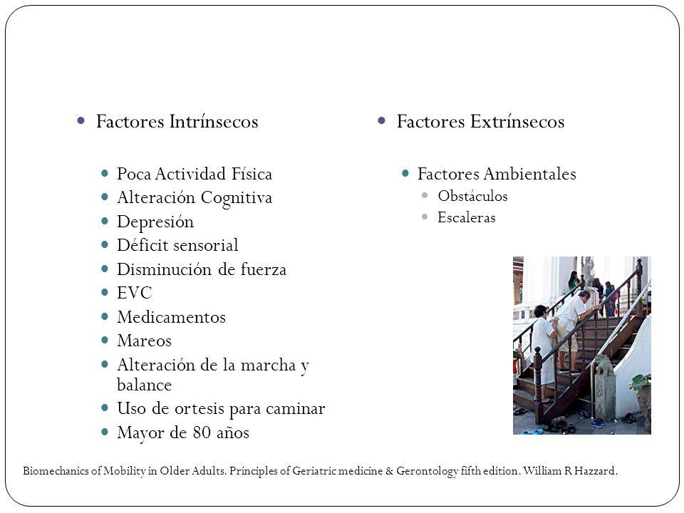 Factores Intrínsecos Factores Extrínsecos Poca Actividad Física