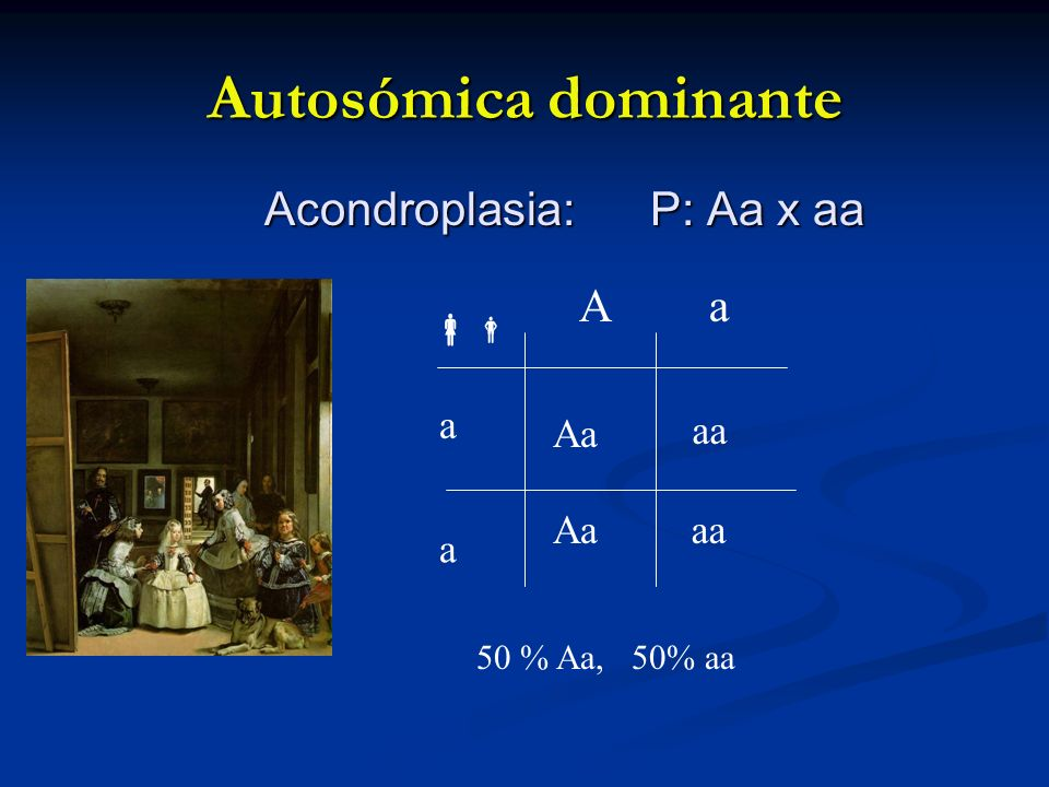 Autosómica dominante Acondroplasia: P: Aa x aa A a  a Aa aa Aa aa a