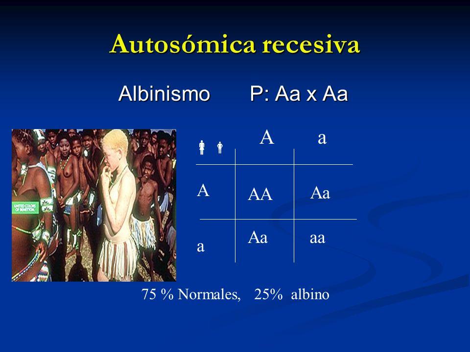 Autosómica recesiva Albinismo P: Aa x Aa A a  A AA Aa Aa aa a