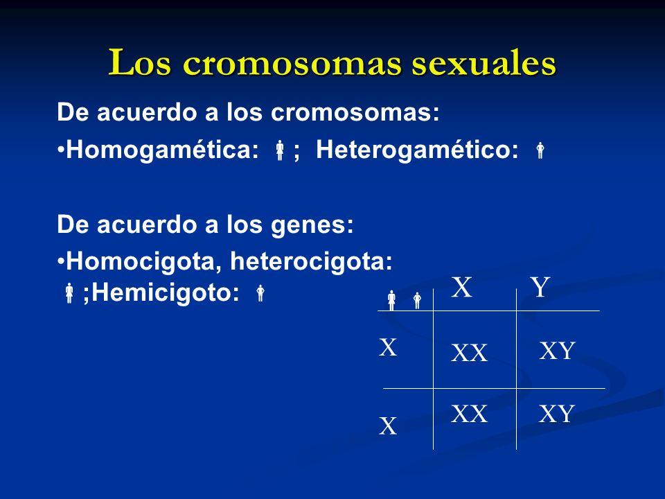 Los cromosomas sexuales