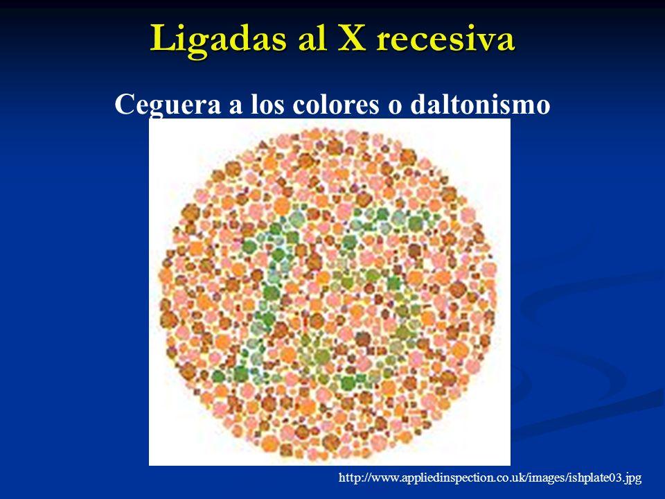 Ligadas al X recesiva Ceguera a los colores o daltonismo