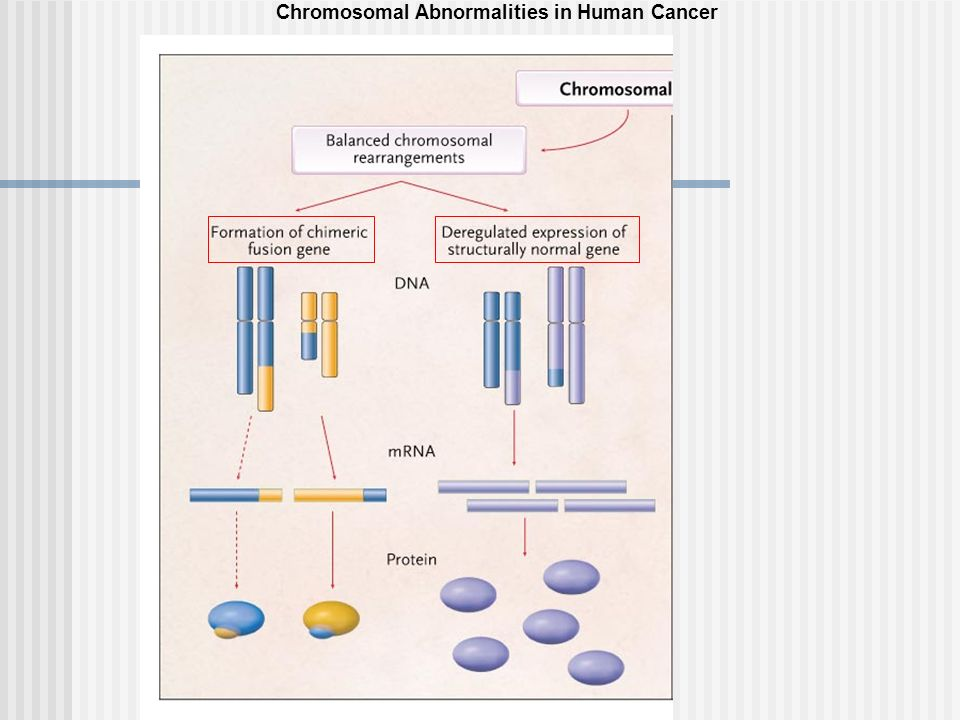 Chromosomal Abnormalities in Human Cancer
