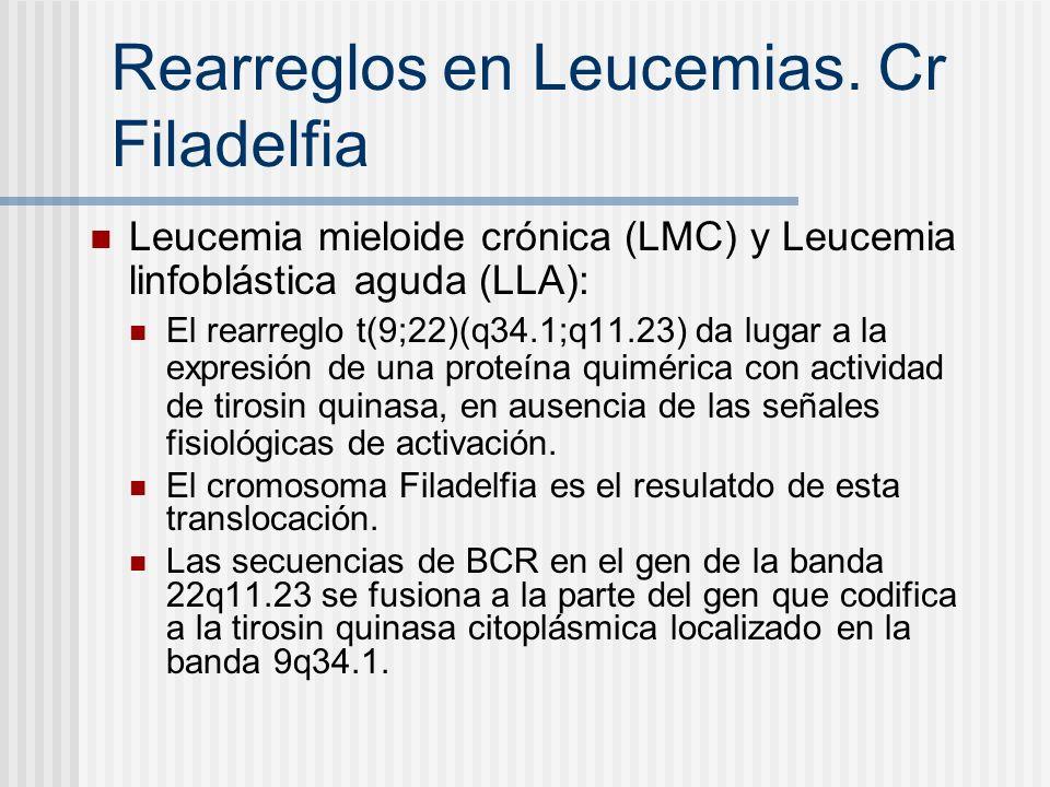 Rearreglos en Leucemias. Cr Filadelfia