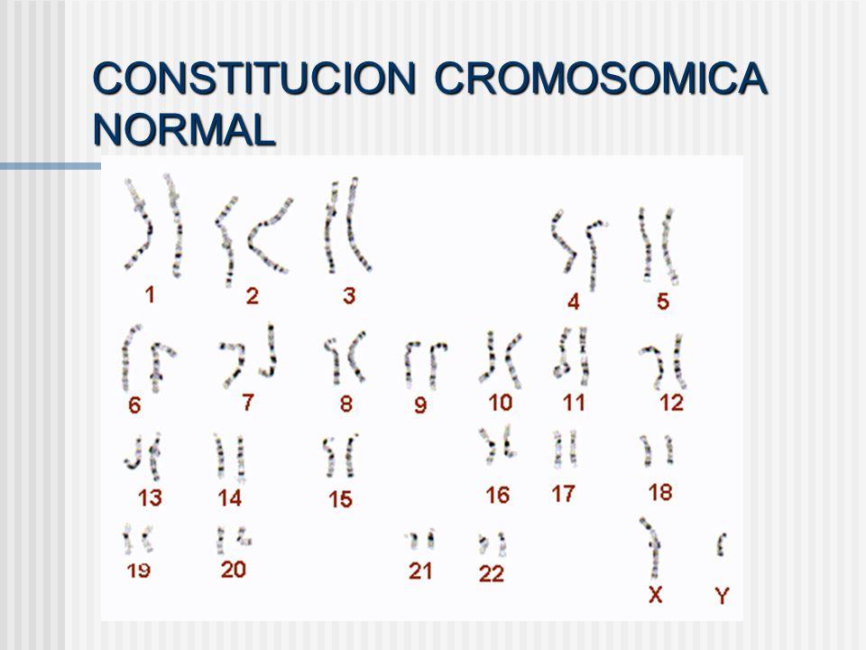 CONSTITUCION CROMOSOMICA NORMAL