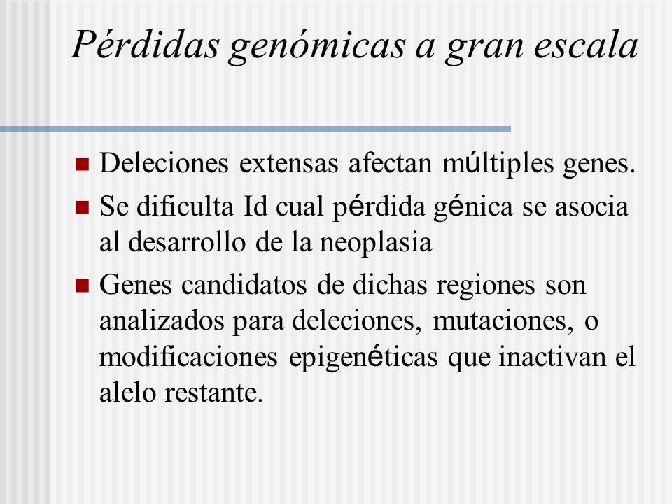 Pérdidas genómicas a gran escala