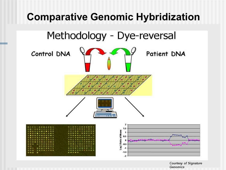 Comparative Genomic Hybridization