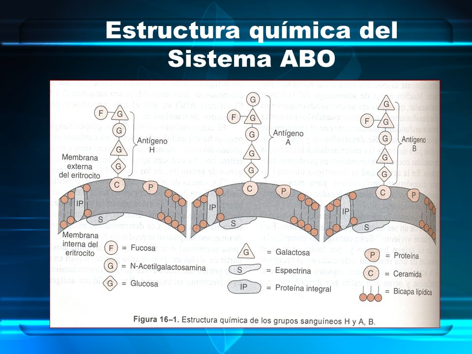 Estructura química del Sistema ABO