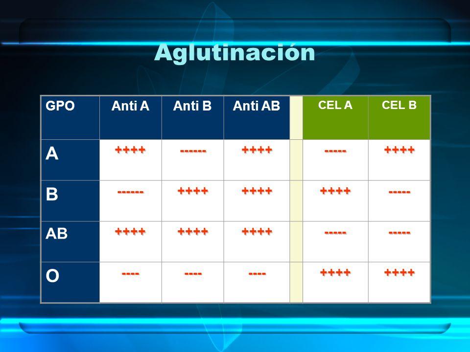 Aglutinación A B O AB GPO Anti A Anti B Anti AB ++++ ------ ----- ----