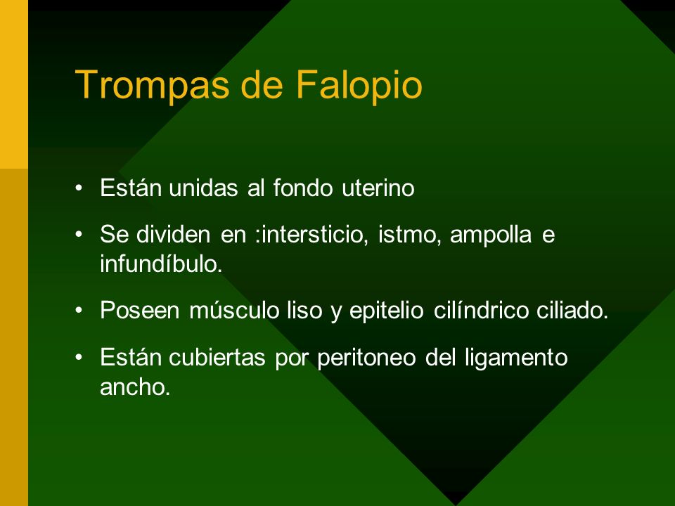 Trompas de Falopio Están unidas al fondo uterino